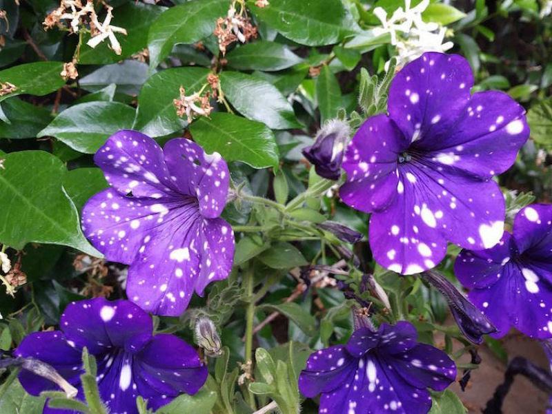 Flores espetaculares parecem ter o universo estampado em suas pétalas 09