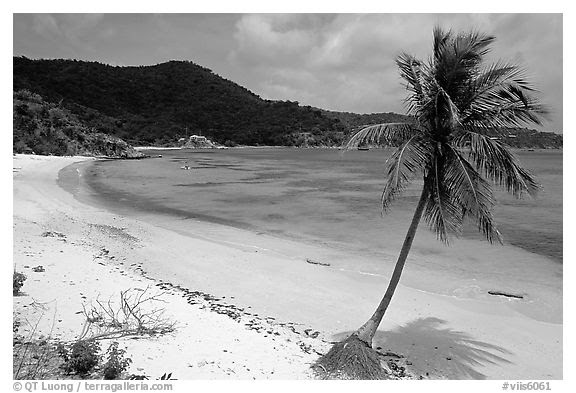 Black And White Picturephoto Beach And Palm Tree In Hurricane Hole