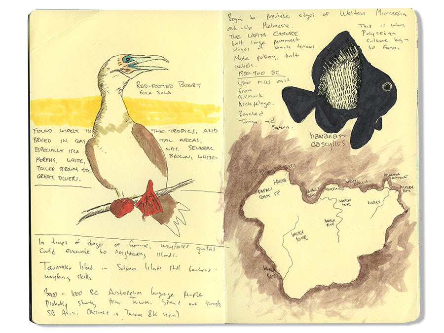 Red Footy Booby Drawing, Sketch of Red Footed Booby
