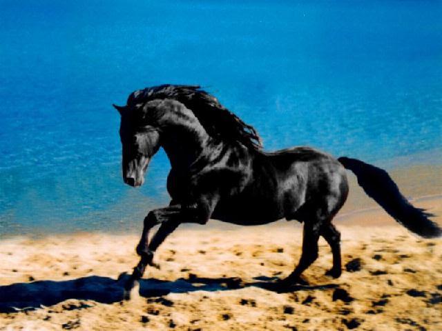 Картинки по запросу фото чёрный конь