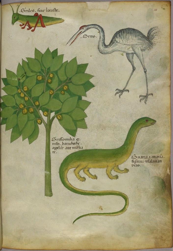 Medieval manuscript : herbal & bestiary