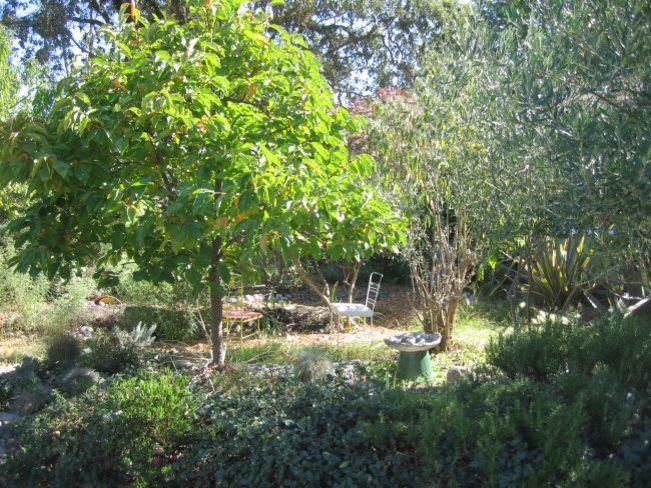 Richard and Janet's garden.