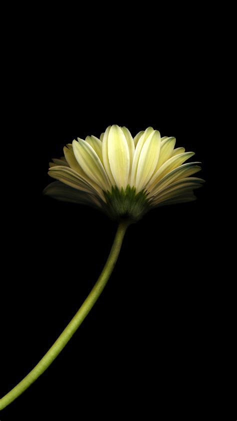Minimal Flower Dark Android Wallpaper free download