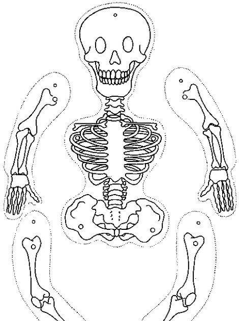 halloween ausmalbilder skelett  ausmalbilder und vorlagen