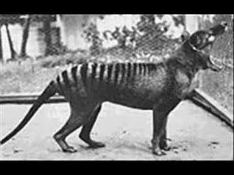 Animales Extintos Durante el Siglo 20 / Extinct Animals 20th Century!