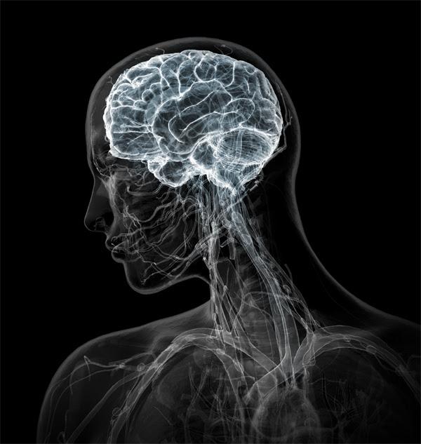 http://neuroethicscanada.files.wordpress.com/2009/09/brain-in-head-bw-l.jpg