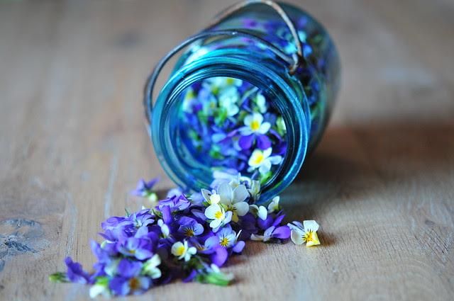 24/4.2011 - violets
