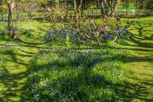 Botanic Gardens - Dublin by infomatique
