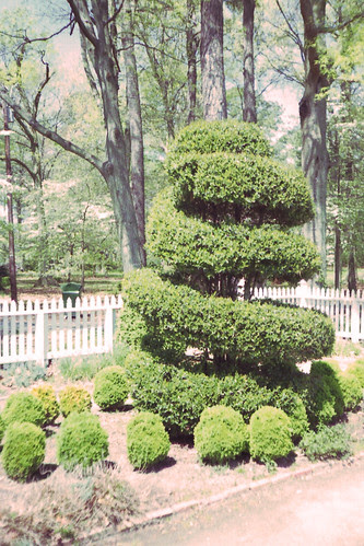 Corkscrew Topiary by bahayla