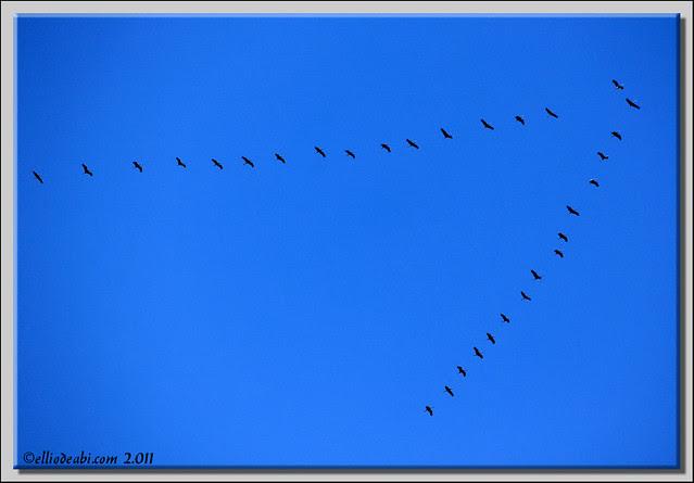 4 migración de grullas