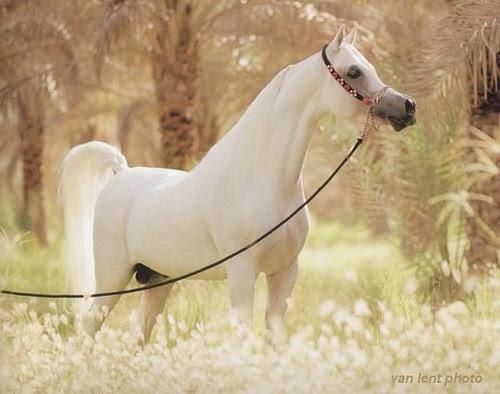 Beautiful horse in evening