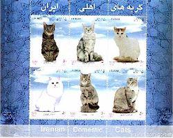 Persian Cat History Persian Cat Names Persian Cat Stories Persian Cat Gallery And More By A Persian