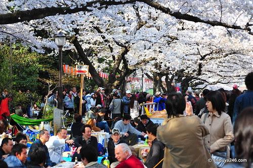 Ueno Park, Sakura