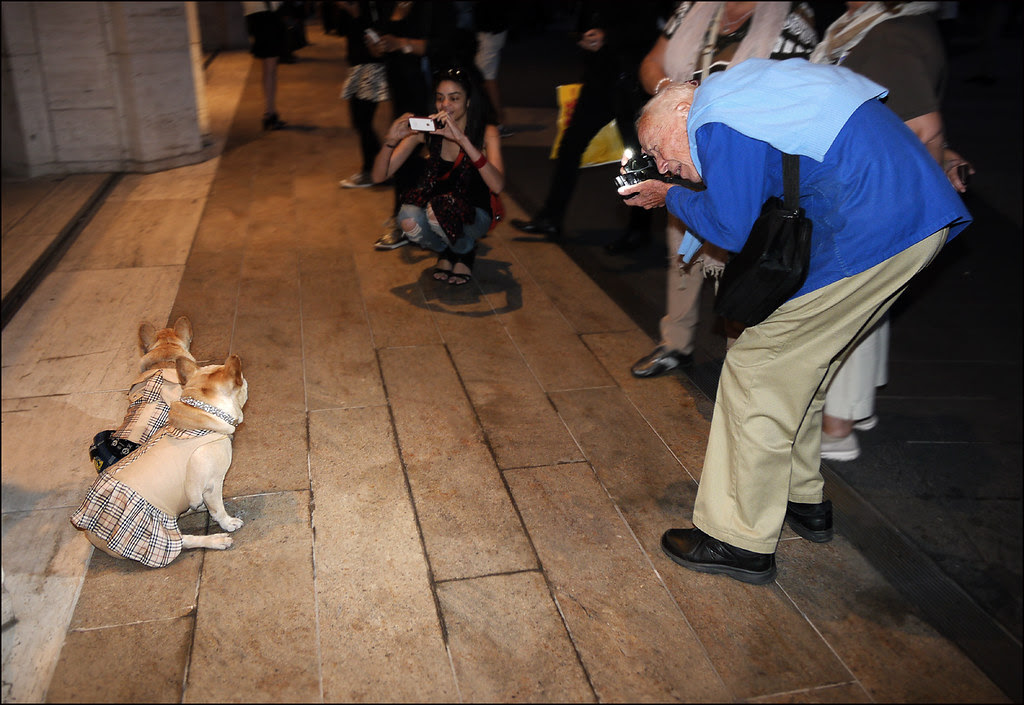35 Bill Cunningham two french bulldogs 1