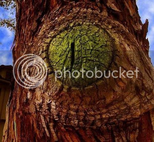 pokok pelik 8 [Gambar Pelik] Koleksi Gambar Pokok Pelik