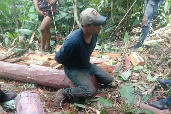 Indígenas 'prendem' homem em corte ilegal de madeira em reserva