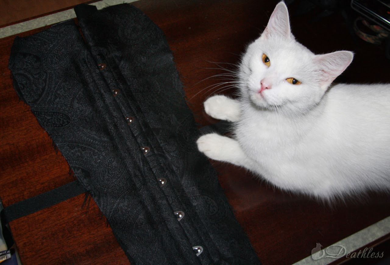 Does Your Cat know how to make a corset?