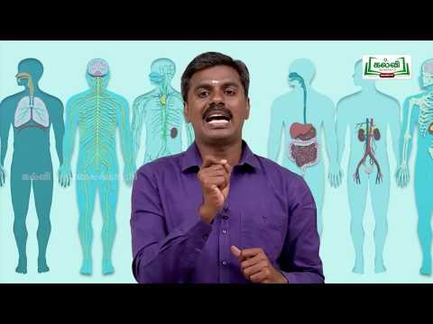 வகுப்பு10அறிவியல்தாவரங்கள்மற்றும்விலங்குகளில் இனப்பெருக்கம் பகுதி3Kalvi TV
