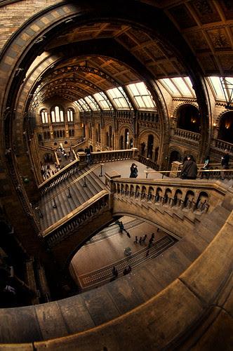 Natural History Museum por martinturner
