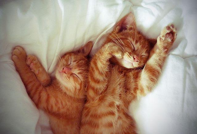orange kitties