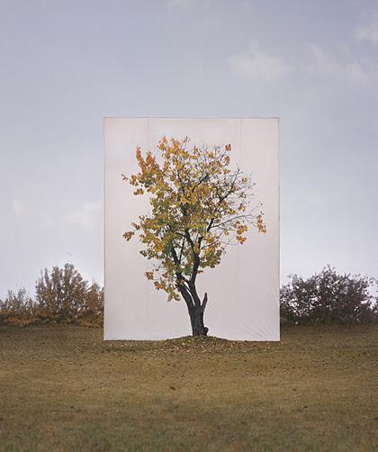 Tree08