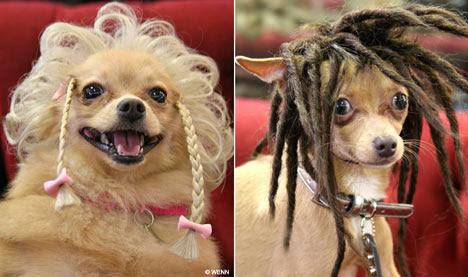Ποιά σκυλιά πρέπει να κουρεύονται