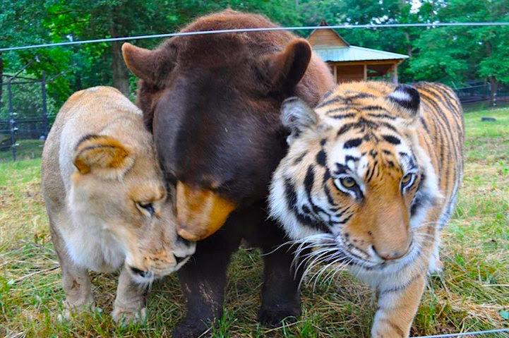amizades_animais1