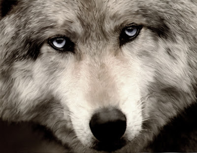 Save wolves from the Bush/Cheney Administration
