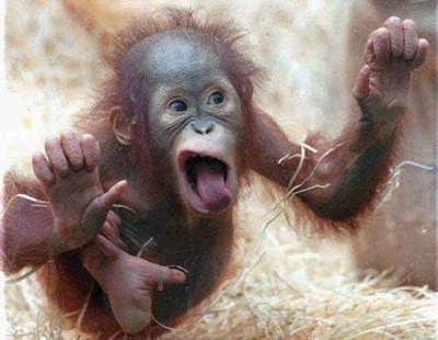 Crazy Monkey Tattoo (@cmonkeytat2) в Instagram.Want to catch a funky monkey and stop him stealing foods and other stuff?.На сайті PrivatBet можна без реєстрації грати на онлайн ігровому слоті Crazy Monkey (Мавпочки) користувачам з Дніпра, Харкова, Києва, Запоріжжя.Серов