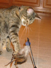 Feathers that move and taunt Maggie