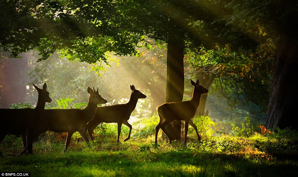 Deer in a spring glade: Photographed by Alex Saberi