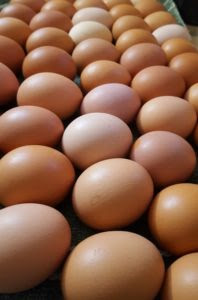 raise-chickens-for-egg-production