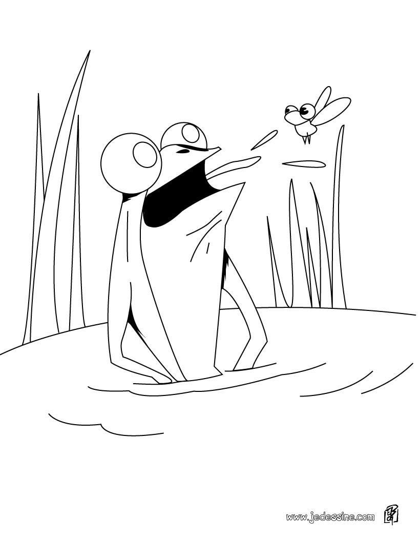 Coloriage d une grenouille qui mange une mouche