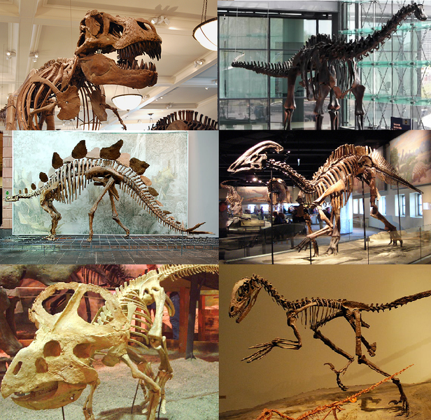 File:Various dinosaurs.png