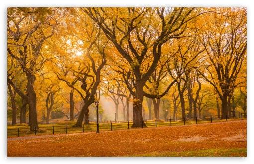 Central Park Fall Foliage 4K HD Desktop Wallpaper for 4K ...