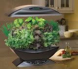 Aerogardens are especially good for herb lovers who make their homes in apartments