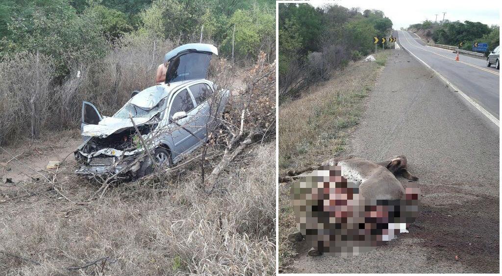 Homem natural de Jacobina colide carro com animal na BR 407 em Filadélfia