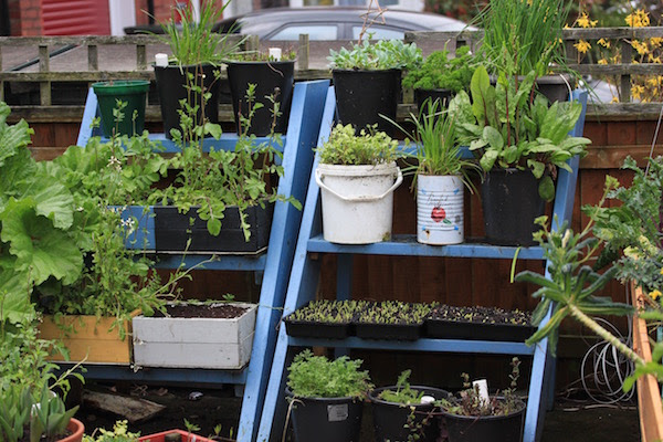 Growing ladders are simple, effective way of growing more in a small space.