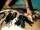 Homem é suspeito de decapitar cadela  (Rafaela Rebouço)
