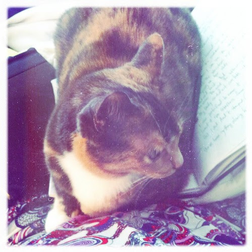 Octavia has missed me writing