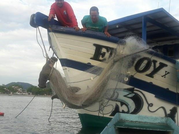 Pescador se surpreende ao fisgar tubarão-martelo de 230 kg: 'Alegria'