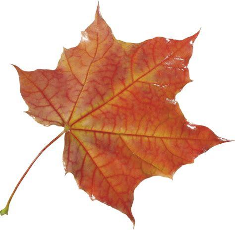 autumn png leaf hq png image freepngimg