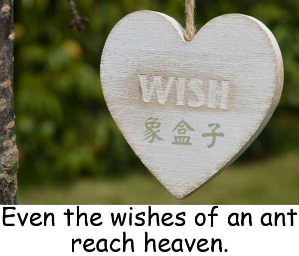 wishes 心願 願望 祝福
