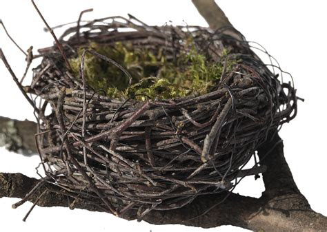 photo easter decoration easter nest birds nest nest