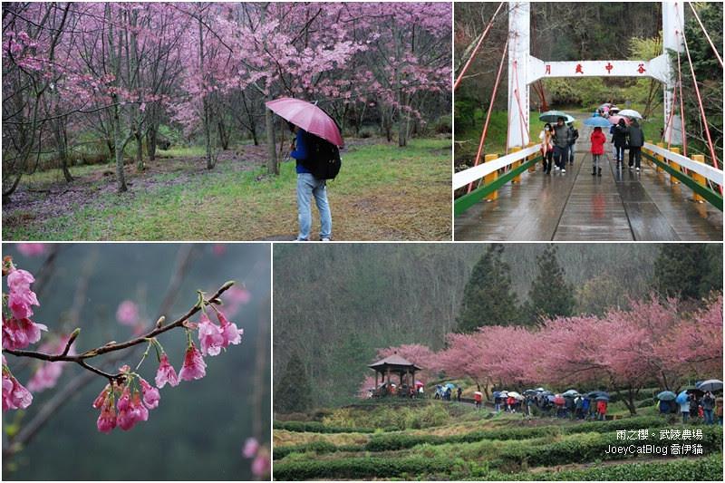 2012_0227_雨之櫻。武陵農場cover
