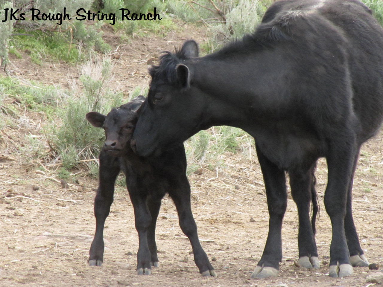 EllieMae & Black Calf
