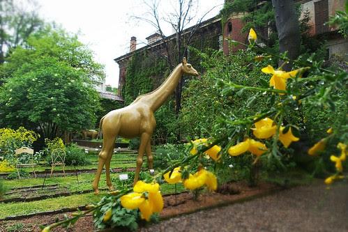 Una giraffa nell'Orto Botanico di #Brera by Ylbert Durishti