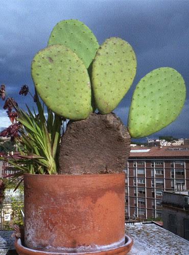 cactus - animated stereogram by pho-Tony