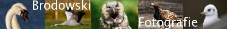 Vogel Beobachtungen