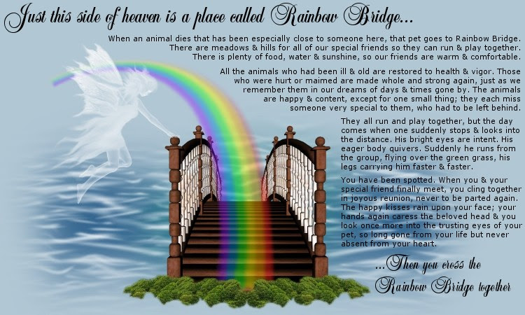 Parrot Toy Angels Rainbow Bridge Poem